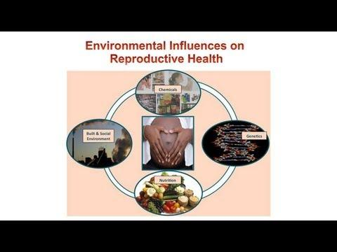 Women's Health and the Environment: What's Safe and What's Not